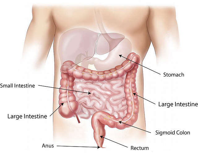 check-up gastroenterologo